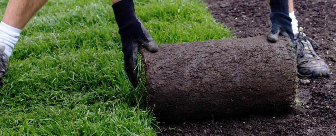 Anläggning av gräsmatta