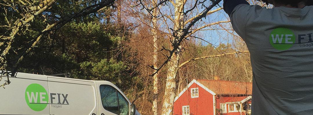 Beskärning av buskar & träd