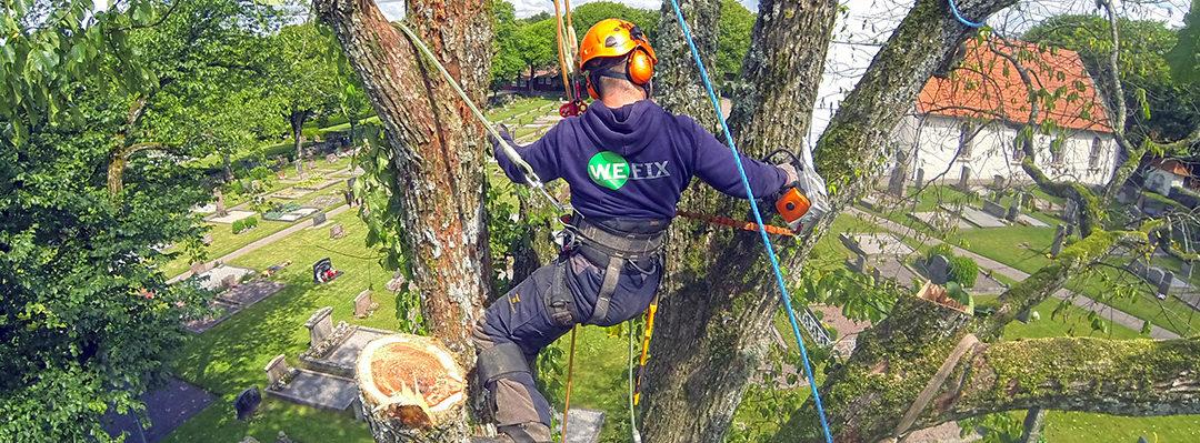 Trädfällning i Kungsbacka och Göteborg